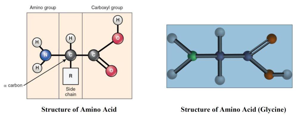 structure diagram of amino acid