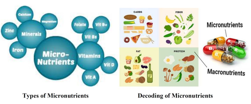 diagram of micronutrients