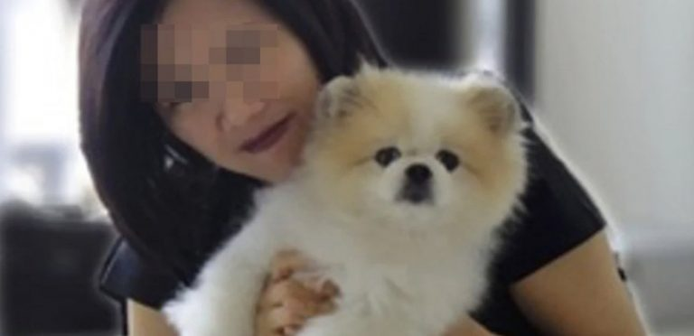 17 year old Pomeranian diagnosed with coronavirus