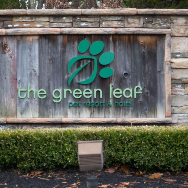 green leaf pet resort immune-d testimonial